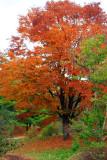 Morton Arboretum - Colors of one tree
