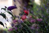Moth in Montalcino 3.jpg