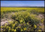 The plains near Balguer - Little Bustard territory