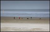 Walking on the beach - Holland