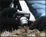 Photography at Keen of Hamar (Frog Orchid)