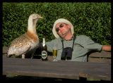 Looking for Great Bustards in Hungary 2000