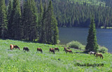 horses-by-the-lake-2-08.jpg