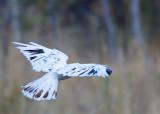whitehawk_7330.jpg