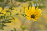 0717 Yellow Flower