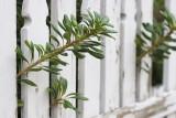 2617 Picket Fence