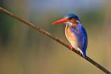 Botswana Birds