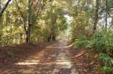 [02] Botanical Garden - Penang Hill via Step Trail 46
