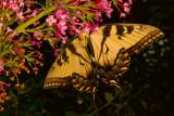 Butterfly Upside Down