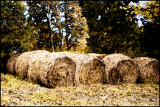 Hay Bales in the autumn watercolor
