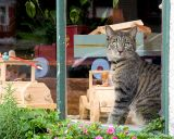 Cat in a toy store window