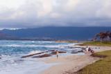 Fort Hase Beach Shoreline