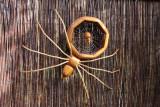 Uzi Gazit's wooden creatures