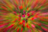 7/26/08 - Petunia Explosion
