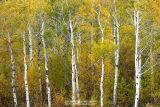 Eastern Sierra Fall Colors - Oct. 6-8, 2006