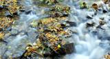 Autumn, Groudle Glen