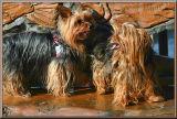 Tedley & Tiggy at the River Park