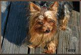Tiggy at the River Park having fun