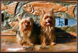 Tedley Tiggy 19.jpg