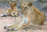 Female + Cub