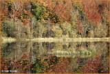 .IRELAND - MONAGHAN - ROSSMORE FOREST PARK - PRIESTFIELD LAKE