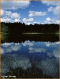 IRELAND - MONAGHAN - ROSSMORE FOREST PARK - ARDAGHY LOUGH