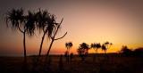 Hawk Dreaming Sand Palms Silhouette