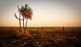 Sand Palms at Dusk