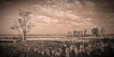 Golden Hour of the Floodplain - Duotone