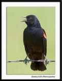 Black Bird at 1200mm...