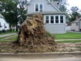 word is that the city wont take this stump...