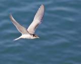 Juvenile Flight