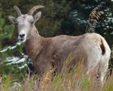 Here's Looking At Ewe