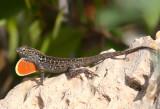 Cuban Reptiles