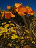 flowers at eagle rock.jpg