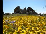 eagle rock thru flowers.jpg