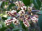 small berries.jpg