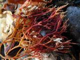 more seaweed.jpg