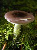 purple and white mushroom.jpg