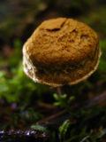 textured mushroom.jpg