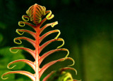 Leaf Me Be