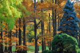 Fall @ the National Arboretum