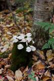Birdsacre Stanwood Wildlife Sanctuary