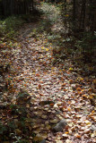 Leaf-strewn Path In Birdsacre