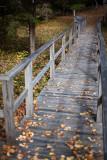 Birdsacre Boardwalk #1