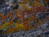 Autumn Light Meets Winter Light