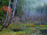 Autumn Along The Sol Duc Road