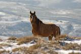 Pilot Butte Wild Horse Loop