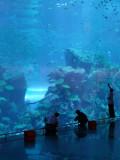 Cleaning Dubai Mall Aquarium.jpg