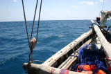 Searching for whale shark